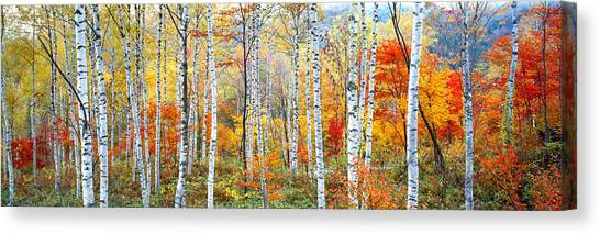 Horizontal Canvas Print - Fall Trees, Shinhodaka, Gifu, Japan by Panoramic Images