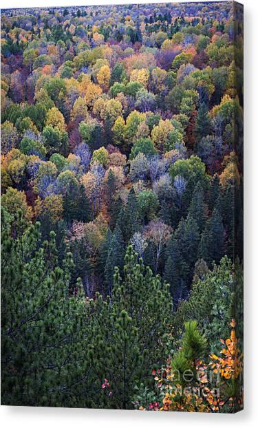 Algonquin Park Canvas Print - Fall Treetops At Lookout by Elena Elisseeva