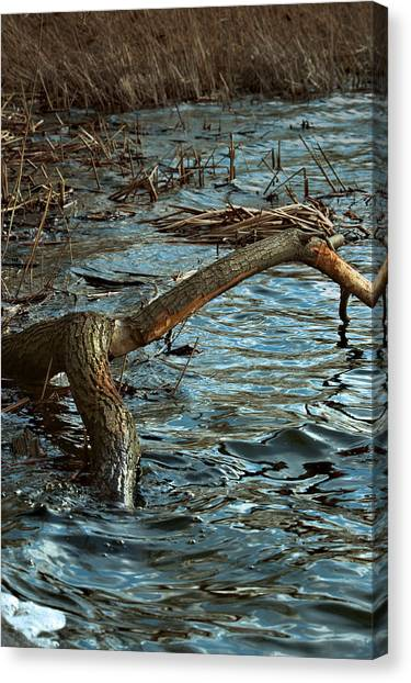 Fall Waters Canvas Print by Mike Feraco