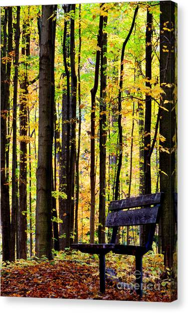 Fall Woods In Michigan Canvas Print