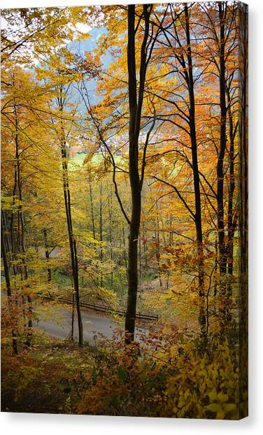 Fall Woods Canvas Print by Marie Sullivan