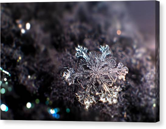Snowflakes Canvas Print - Fallen Beauty by Rob Blair
