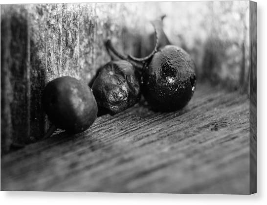 Fallen Berries Canvas Print