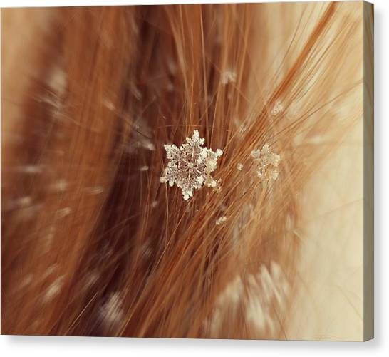 Canvas Print featuring the photograph Fallen Flake by Candice Trimble
