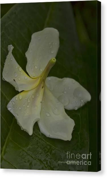 Carribbean Canvas Print - Fallen From The Rain by Deborah Benoit