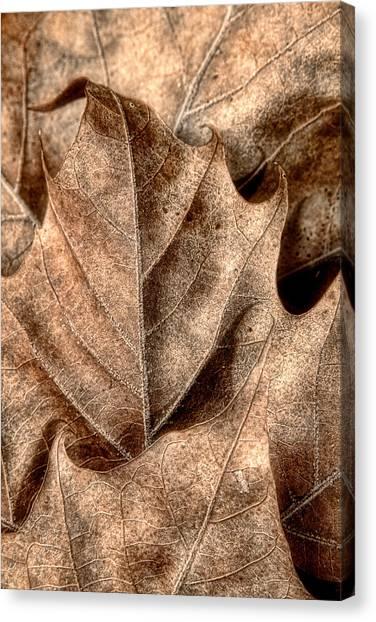 Fallen Tree Canvas Print - Fallen Leaves I by Tom Mc Nemar