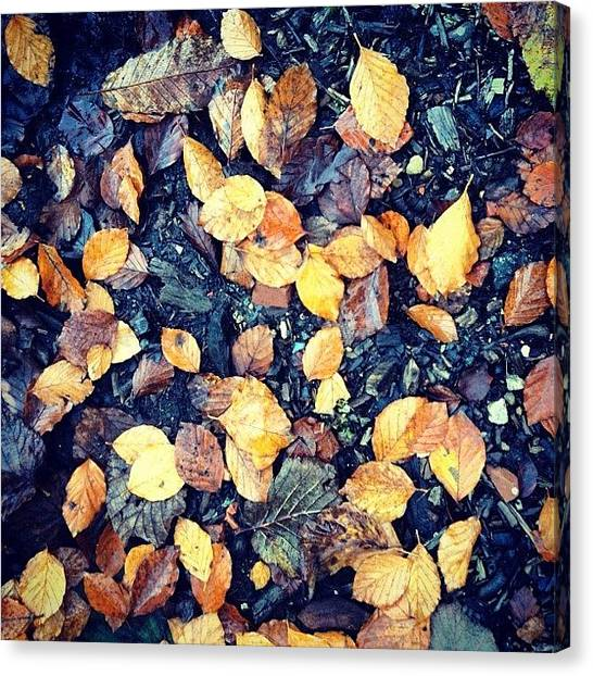 Autumn Leaves Canvas Print - Fallen Leaves by Nic Squirrell