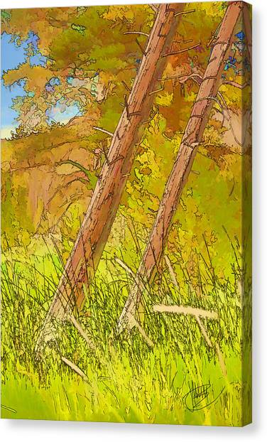 Fallen Pines Canvas Print