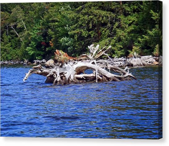 Fallen Tree In A Lake Canvas Print