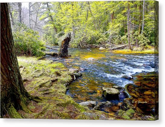 Fallen Tree In Stream Pocono Mountains Canvas Print
