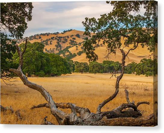 Fallen Tree With A View Canvas Print