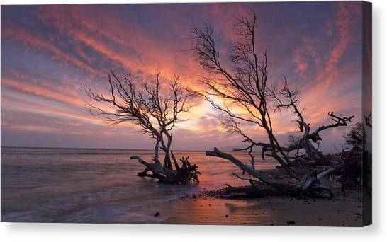 Fallen Trees Canvas Print by James Roemmling