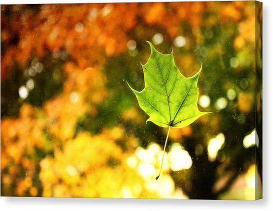 Falling Leaf Canvas Print