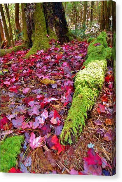 Fall's Carpet Canvas Print