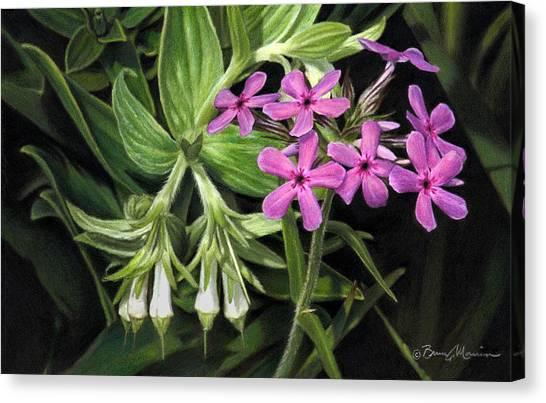 False Gromwell With Prairie Phlox Canvas Print