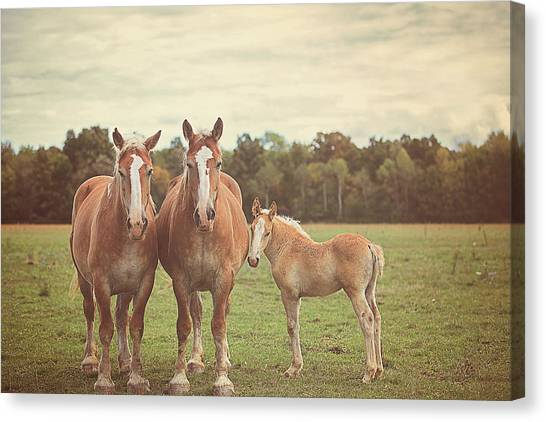 Horse Farms Canvas Print - Family by Carrie Ann Grippo-Pike