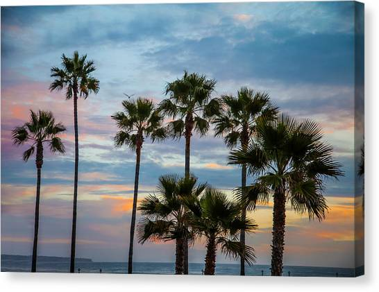 Family Of Palms Canvas Print