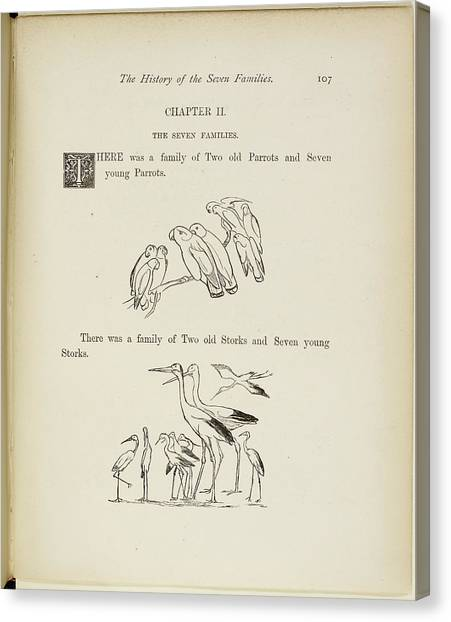 Storks Canvas Print - Family Of Parrots And Family Of Storks by British Library