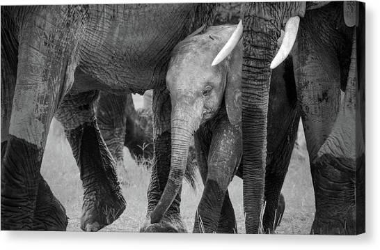 Kenyan Canvas Print - Family Protection by John Fan