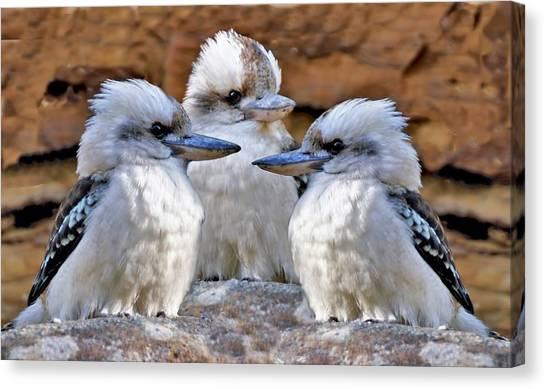Family Ties - Kookaburra Style Canvas Print