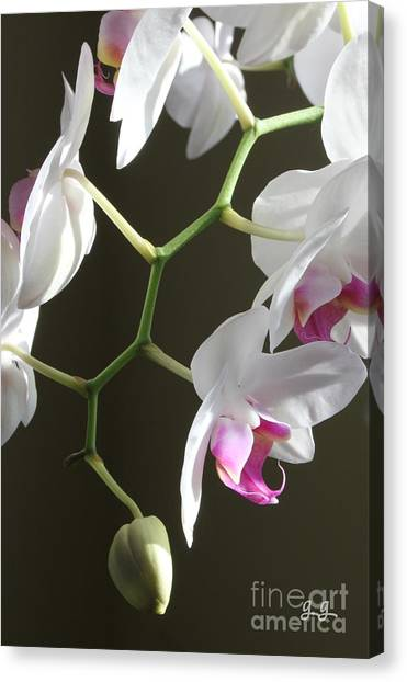 Family Twig Canvas Print