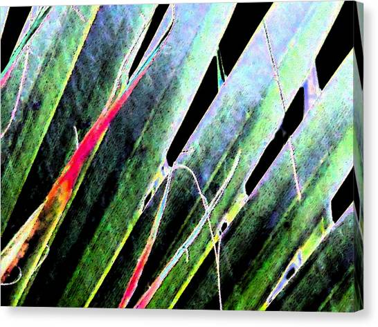 Fan Palm On Wet Day Canvas Print