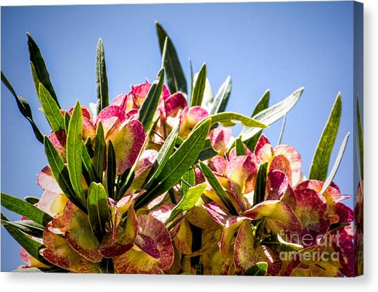 Fanned Flowers Canvas Print