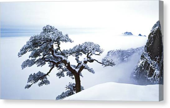 Winter Landscapes Canvas Print - Fare-well Pine Tree by King Wu