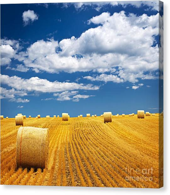 Hay Bales Canvas Print - Farm Field With Hay Bales by Elena Elisseeva