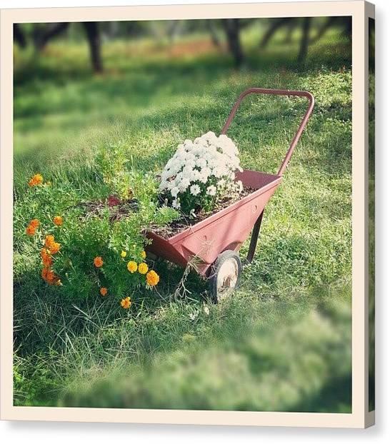 Kirby Canvas Print - #farm #flowers #rustic by Blake Kirby