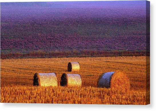 Hay Bales Canvas Print - Farmers Field by Allan Wallberg