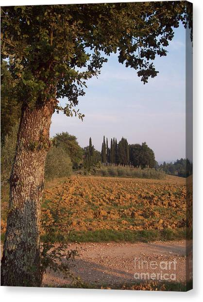 farming in Tuscany Canvas Print