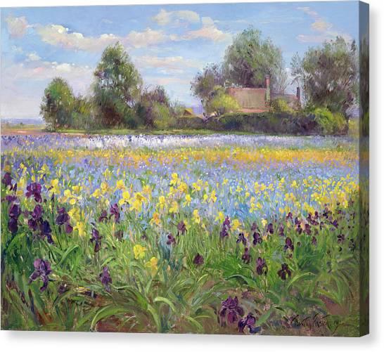 Farmstead Canvas Print - Farmstead And Iris Field by Timothy Easton