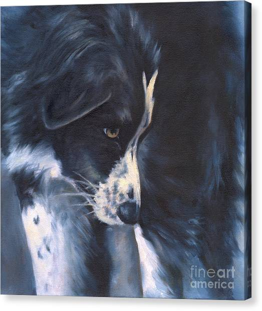 Border Collies Canvas Print - Fascinated by Linda Shantz
