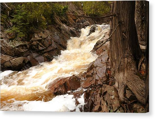 Fast Water And Cedars Canvas Print by Sandra Updyke
