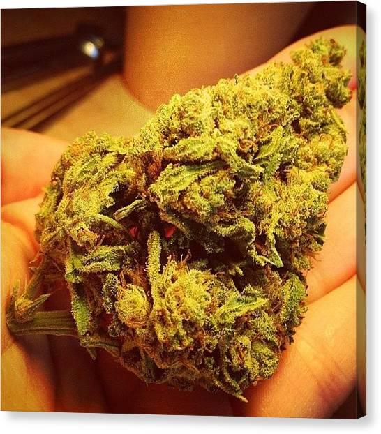 Marijuana Canvas Print - Fat Birthday Nug Of The Emerald by Hannah Kay