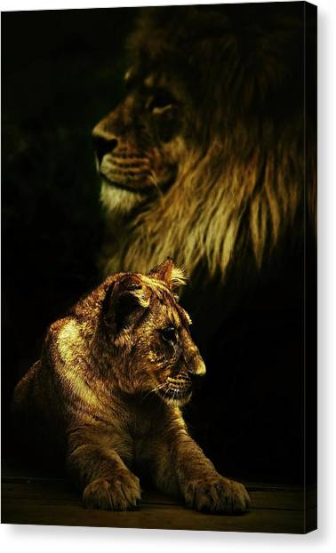 Father And Son Canvas Print by Catalin Buzlea