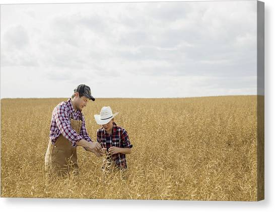 Father And Son Checking Wheat Crop Canvas Print by Hero Images