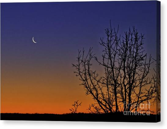 Favorite Moon Canvas Print