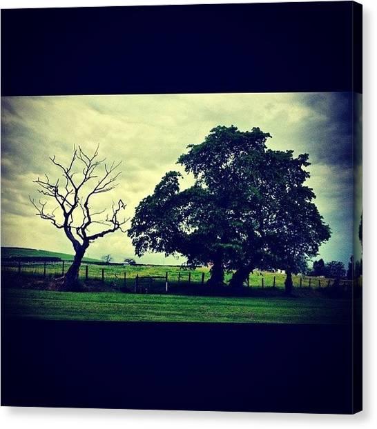 Golfers Canvas Print - #favouritetree #tree #treenecrophilia by David Cockell