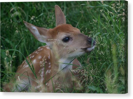 Fawn In Weeds Canvas Print