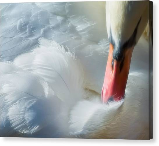 Feather Flufifng Canvas Print