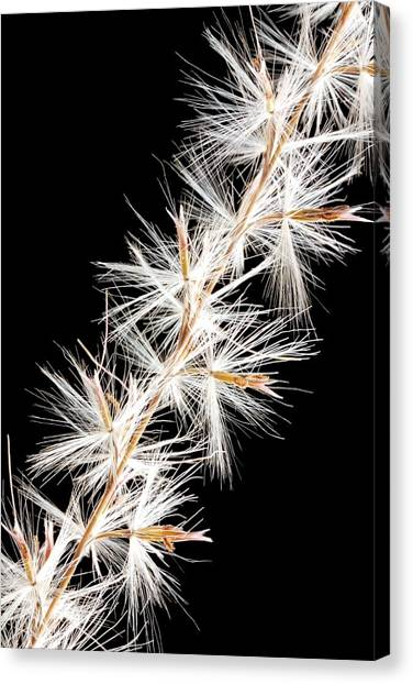 Perennial Canvas Print - Feather Reed Grass by Jim Hughes