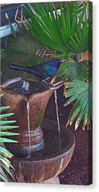 Feathered Fountain  Canvas Print