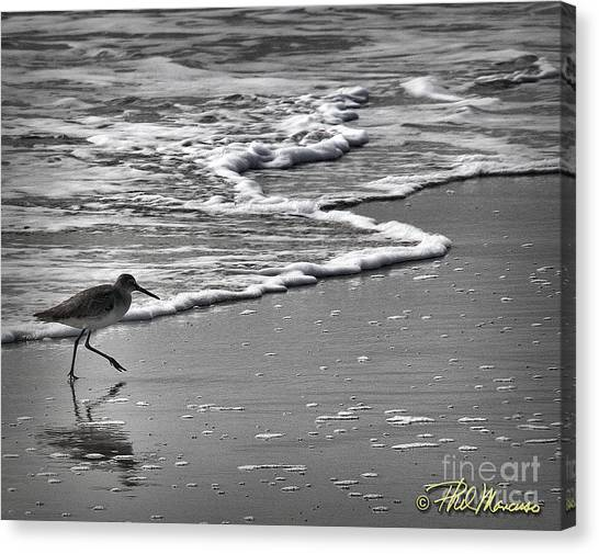 Feathered Friend At The Beach Canvas Print