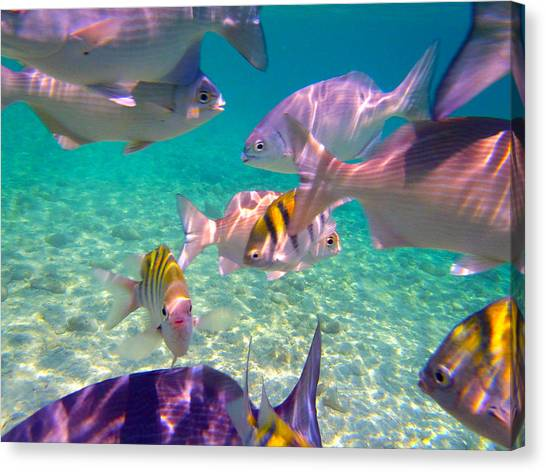 Tropical Fish Canvas Print - Feed Time by Carey Chen