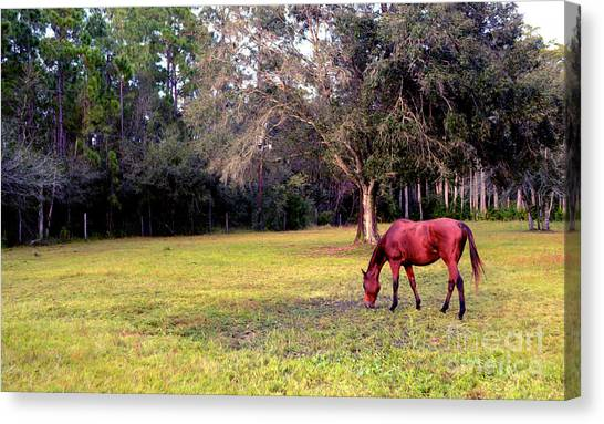 Horse Farms Canvas Print - Feeding In The Pasture by Jon Neidert