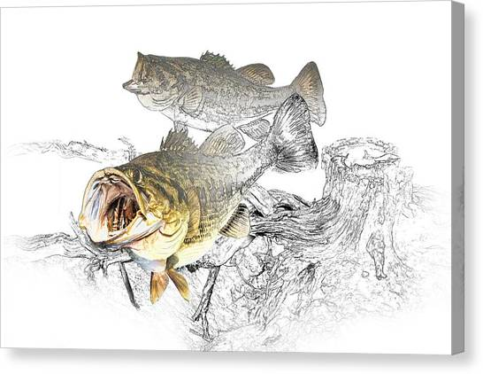 Bass Fishing Canvas Print - Feeding Largemouth Black Bass by Randall Nyhof