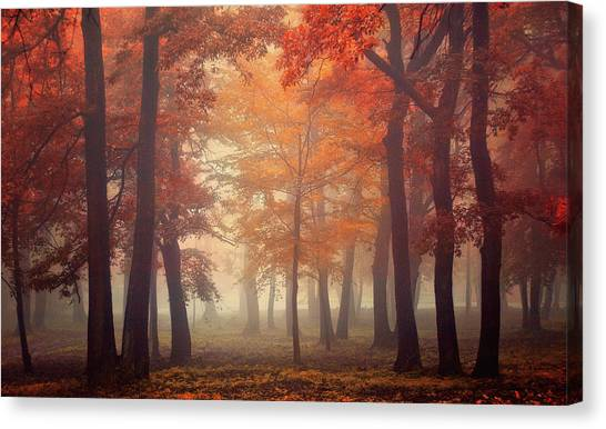 Feel Canvas Print by Ildiko Neer