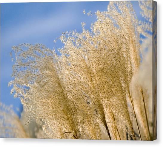 Feel The Breeze Canvas Print
